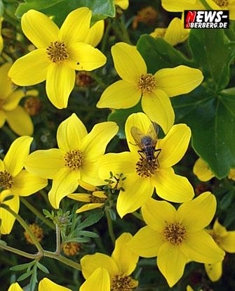 Foto des Tages – Daily Moments! ´Biene Maja!´ Die Geschichte von Bienchen und Blümchen – gestern heute morgen und andere Ansichten