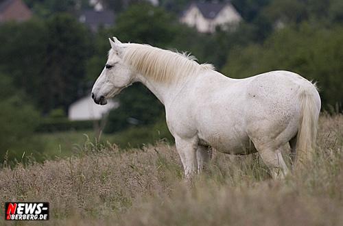 Daily Moments – Foto(s) des Tages: ´Pferdeimpressionen!´ Der Schimmelreiter!´Der Schimmel ohne Reiter. Aufmerksame Pferde haben in der Regel bewegliche Ohren