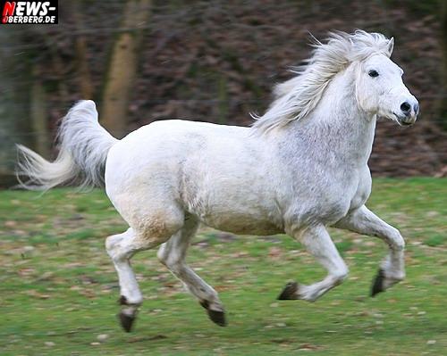 ntoi_nic_zwei_weisse_pferde_11.jpg