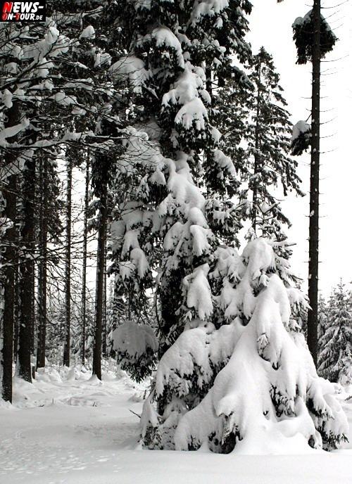 Winterschlaf, Schnee, Tannen, Winterlandschaft