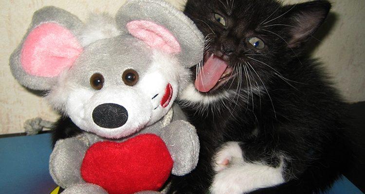 X-Mas: Damit aus Weihnachten keine böse Überraschung wird! Katzen und Hundewelpen stehen auf den Wunschzetteln für Weihnachten ganz weit oben