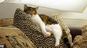 Die Katze lässt das Mausen nicht! Katzen wählen instinktiv Futter, dessen Zusammensetzung ihrer natürlichen Beute ähnelt zum Beispiel Mäusen