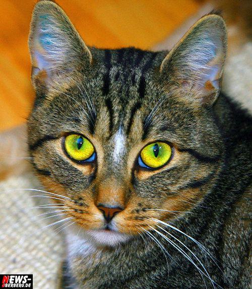 Tierwelt: Schmerzfrei bis ins hohe Alter! Katzen sind im Tierreich geradezu der Inbegriff von Eleganz, Gelenkigkeit und Sprungkraft, alles Merkmale von Vitalität und Lebenskraft