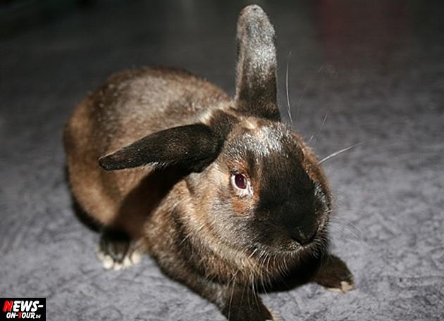 kaninchen_rabbit_hase_ntoi_bugs-bunny