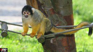 1.000 Euro Belohnung! Diebe stehlen neun Totenkopfäffchen aus Affen- & Vogelpark Eckenhagen