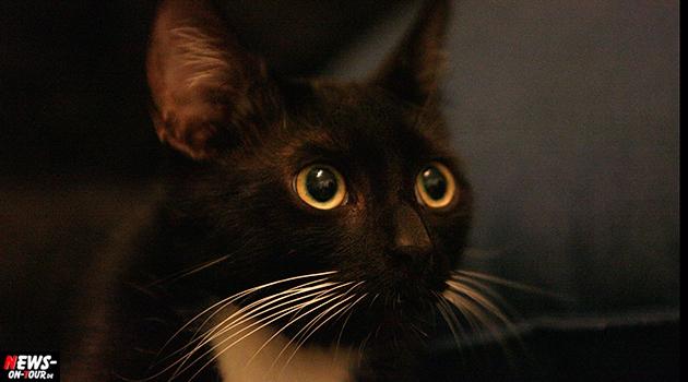 schwarze-katze_haustier_mieze_ntoi_black-cat_schwarzer-kater