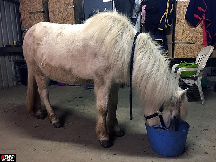 islandpferd_ntoi_iceland-horse_01