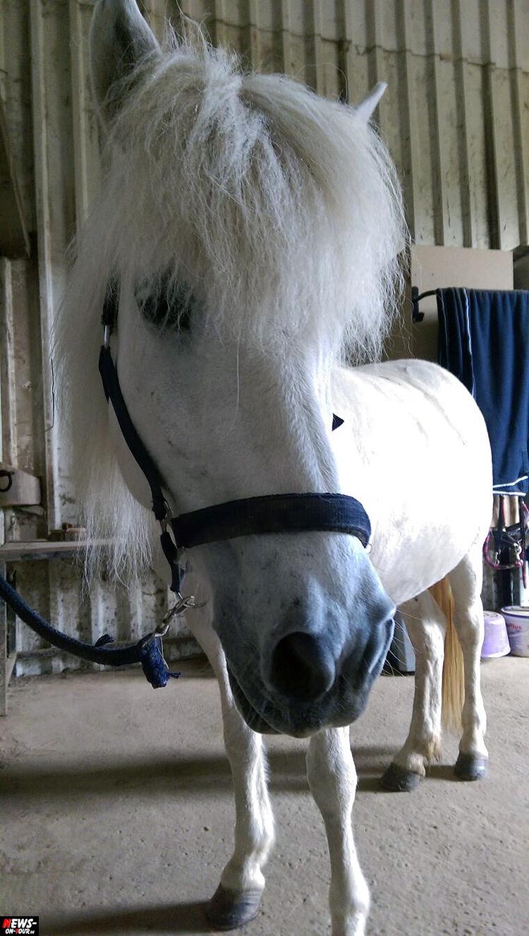 islandpferd_ntoi_iceland-horse_02