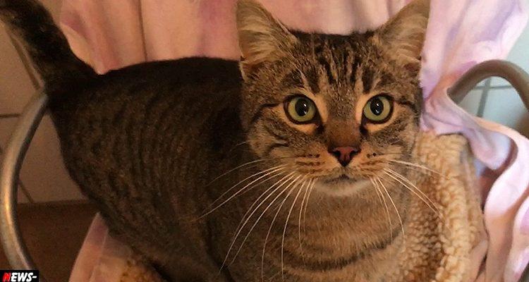 TIER DER WOCHE! Verschmusster Kater Timmi (4) sucht kuscheliges zu Hause! | Tierheim Olpe (Kinky Cat)