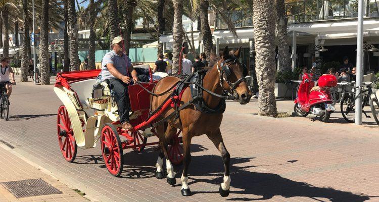 Tierquälerei auf Mallorca! Pferdekutschen im Visier der Tierschützer