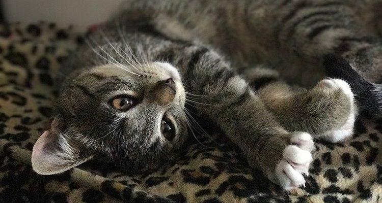 Hund oder Katze als Gedankenstütze beim Passwort für Facebook, E-Mail oder Online-Shopping